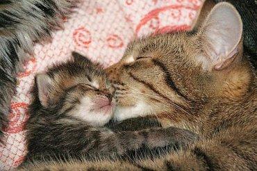 bacio_gatti
