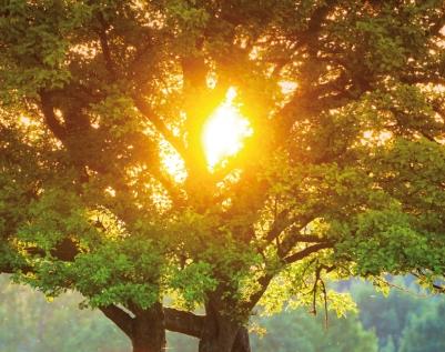 Cop Cattolicesimo ecologia e ambiente 2.indd