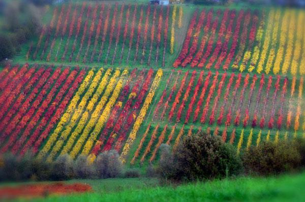 foto-filari-autunno